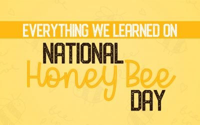 Everything We Learned on National Honey Bee Day